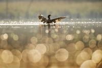 bird-1867066_640