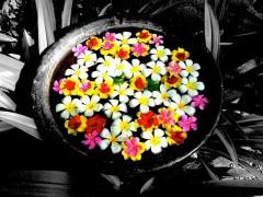 flowers-1716334_640
