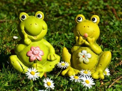 frogs-2191758_640