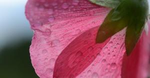 レイキヒーラー養成講座―切り花の持ちがよい